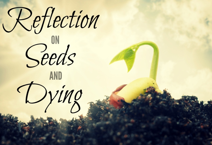 Reflection on seeds and dying