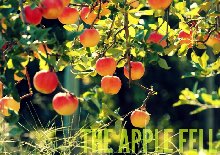 25783-apple-tree-1920x1200-photography-wallpaper 2rb